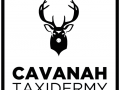 Cavanah Taxidermy 01.png